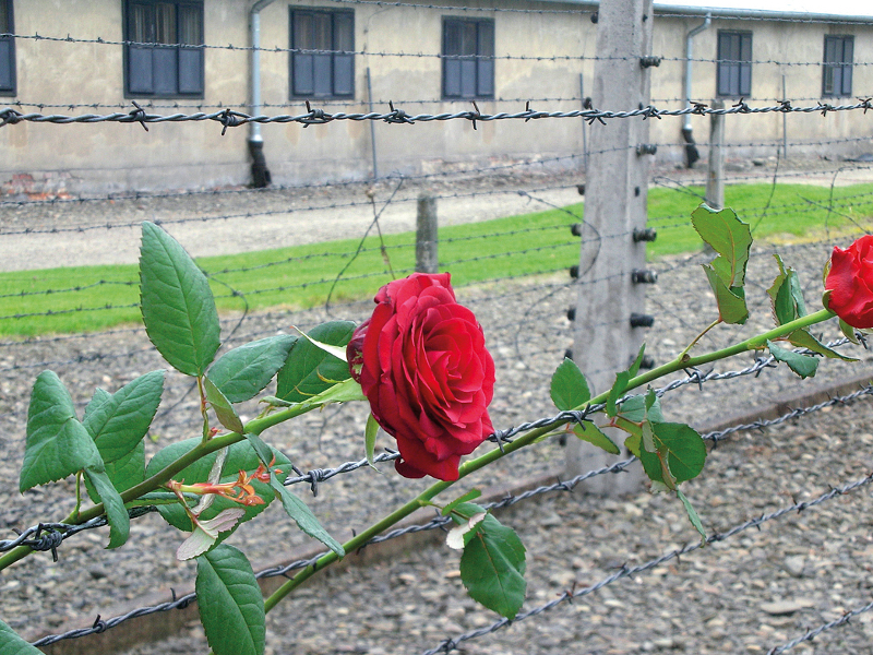 Bethe-Stiftung fördert Gedenkstättenfahrt der DGB-Jugend nach Auschwitz